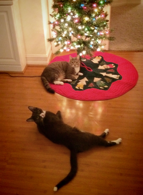 Chester and Milo enjoying the little tree... (an hour later, they knocked it down.)