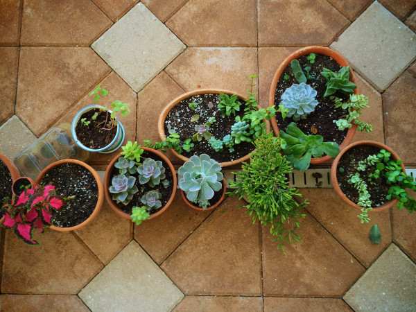 tiny succulent garden